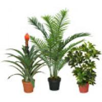 Рослини штучні